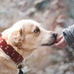 Guida all'acquisto | I migliori gps per cani e per gatti